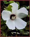 Flower (Specie unknown)
