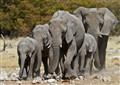 Running elephants
