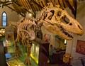 Dinosaur T Rex