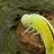 caterpillar_on_tree