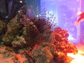 A shop aquarium in Tokyo