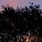 sunrise_trees-hd