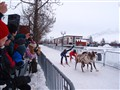 Reindeer Sprint Races