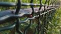 Ladybug Fence