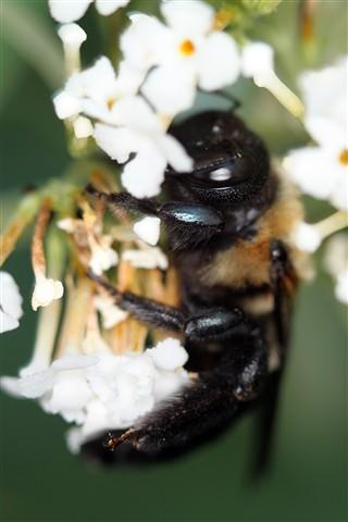sleepingbee1