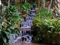 Botanical Garden in Rio