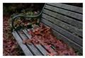 Resting leaves