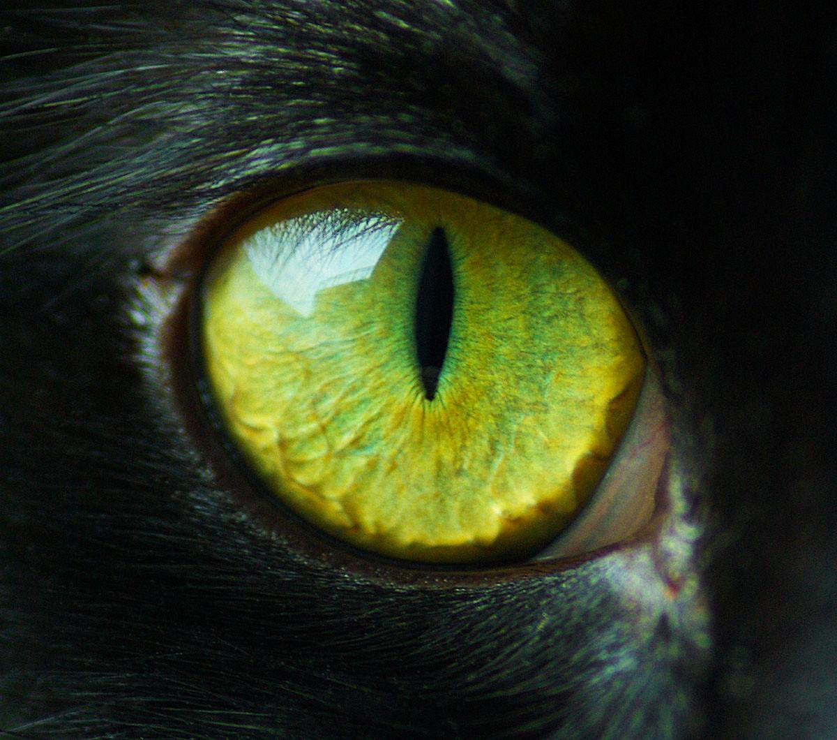 Mm Cat Eyes