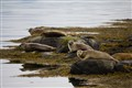Seals relaxing