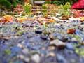 Finnerty Garden