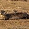 River Otters _ IMG_9489