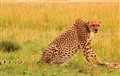 Mother of all Cheetah