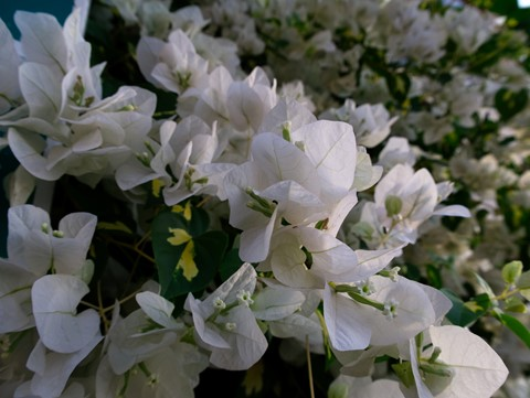 Contrasty White Bouquet