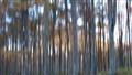 trees panning