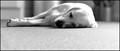 LUNA Sleeps