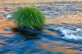 river hummock
