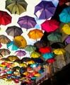 Umbrellas  @ Lunch