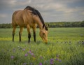Horse among wildflowers