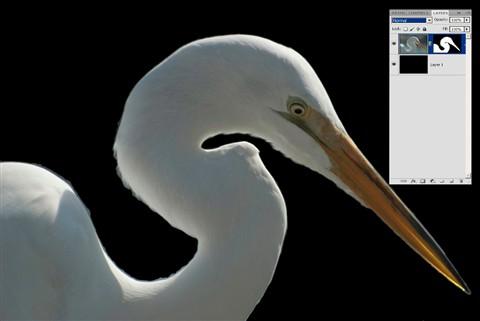 egret-demo