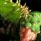florida_cactus