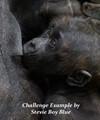 Baby Western Gorilla Howletts Zoo
