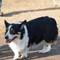 2014-02-01 Dogpark (44 of 61)