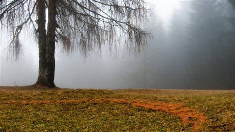 larch and fog
