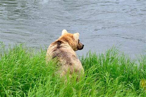Alaska2012_C026_eds