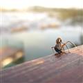 The Dead Bug
