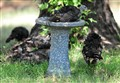 IT'S A BIRD BATH!