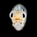 Halloween in the Plankton