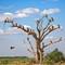 Dead Tree of Death