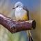 Grasslands-Bird_2