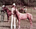 cowgirl and colt at show