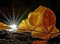 Still life lit by a pocket lamp