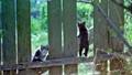 Kittens on fence