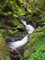 Pucks Glen Scotland