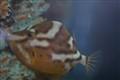 Fish under Busselton pier West Australia