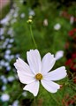A single white flower