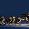 Various-Birds-2014-(37)