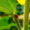 Ladybug-1-Web