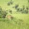 Leopard - Serengeti NP