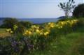 Summer Flowers by the Ocean