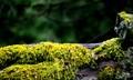 Fence Rail Moss!!!