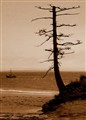 Lone Pine Beach