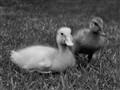 Hello ducky!