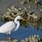 2-16-14 #401 SOOC  egret (1 of 1)