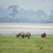 Black Rhinos - Ngorongoro Crater