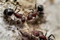 Ant Conference
