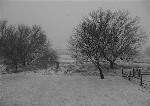 snow view #2